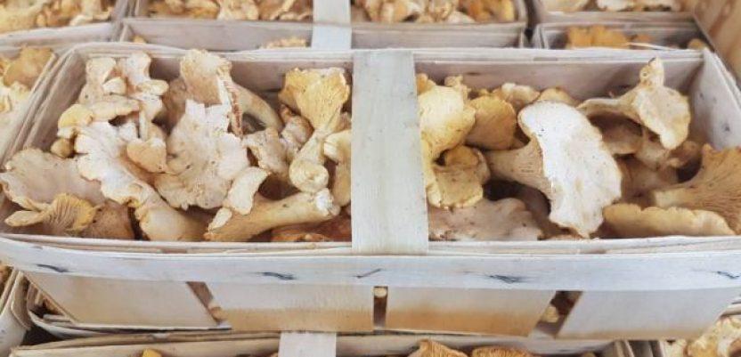 Izvoz pečuraka težak oko 5,5 miliona evra godišnje