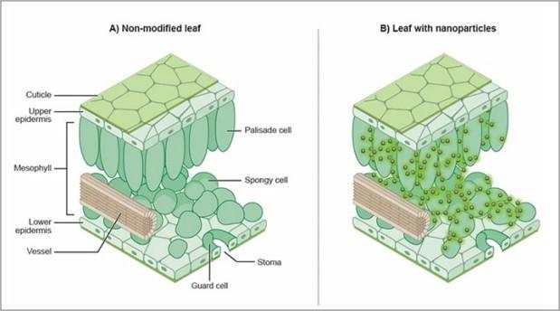 Hoćemo li sijalice zameniti svetlećim biljkama