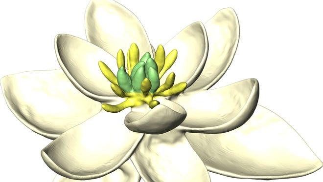 Kako je izgledao prvi cvet na Zemlji